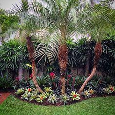 """32 Me gusta, 6 comentarios - DECORPLANTAS Paisajismo (@decorplantas) en Instagram: """"El jardín de hoy para cerrar la semana(BROMELIAS)"""""""