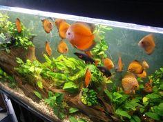 ryby akwariowe serwis