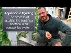 If you're starting an aquaponic system, it's important to understand what it takes to start producing your crops. Cycling your system is the next crucial step after you do the initial build. Stay tuned for more helpful videos!    Nate is the Co-Founder of Bright Agrotech, a leader in vertical, space saving aquaponics and hydroponics systems and a ...