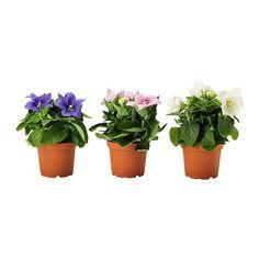 IKEA - PLATYCODON, Pflanze, Grünpflanzen und Übertöpfe im persönlichen Stil beleben die Einrichtung.