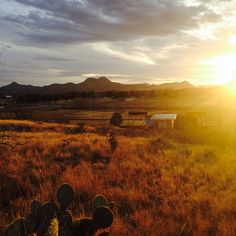 """""""A Cactus in the Sun"""" by Samantha Banegas, #shootingalpine Photo Contest entry. #alpinetexas"""