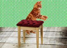 Katten / poezen: achter