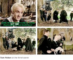 tom felton :) come on... who doesn't love his personality