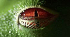 I got 8 out of 15 on Can You Guess The Animal From Its Eyeball?!