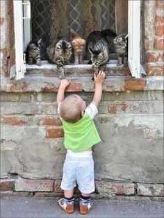 """Come down and play... * * LEANING TABBY: """" Don'ts do it guys, little humans are too 'tardo yet to trust. Der brains haz to develop more before you kin trust em."""""""