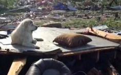 How You Can Help Dogs Affected By The Texas Tornadoes
