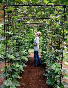 Vegetable Garden Design: DIY Bean Trellis Now that's a great way to grow beans! DIY vegetable garden building a bean tunnel ; Gardenista The post Vegetable Garden Design: DIY Bean Trellis appeared first on Garden Diy.