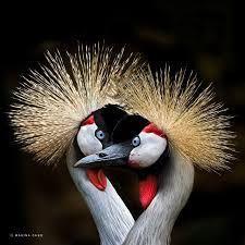 Wild birds #birds #oiseaux #photograph #nature #wild #sauvage #artphotography