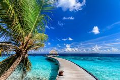 Get the best offers on Maldives Tour packages from Delhi, if Maldives is your dream vacation. We currently offer 6 Maldives tour packages. You can choose from them and book one according to your budget and requirements. Maldives Vacation, Maldives Honeymoon, Best Honeymoon, Romantic Honeymoon, Honeymoon Ideas, Maldives Tour, Honeymoon Inspiration, Romantic Getaway, Italy Vacation