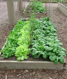 Garden raised beds, containers, and small plots. Five tips to help you grow more produce in less space. Advice and garden plot plan by The Old Farmer's Almanac.