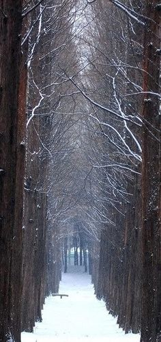 Winter Magnificence