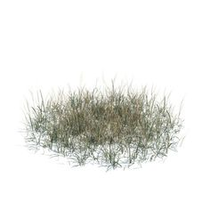 long dry grass 3d model obj 1