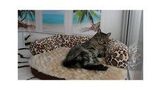 La Ocean Suite, del West Lodge Cattery. El paraíso de cualquier gato.