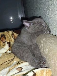 New cats sleeping funny gatos Ideas Cute Cats And Kittens, I Love Cats, Crazy Cats, Kittens Cutest, Cute Little Animals, Cute Funny Animals, Funny Cats, Pretty Cats, Beautiful Cats