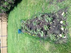 Tomato and herb garden update.               5-29-13