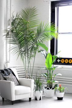 DIY potted plants