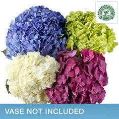 Assorted Hydrangeas - 36 Stems