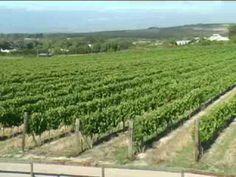 Ken Forrester Wines #SouthAfrica