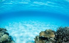 Check out this awesome collection of Underwater wallpapers, with 62 Underwater wallpaper pictures for your desktop, phone or tablet. Underwater Wallpaper, Underwater Background, Ocean Underwater, Uhd Wallpaper, Wallpaper Pictures, Cool Wallpaper, Wallpaper Backgrounds, Coral Background, Background Images