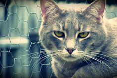 Jick Jack Paddywhack, gave the cat a home
