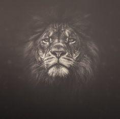 Прекрасные снимки животных Мануэлы Кульпа « FotoRelax