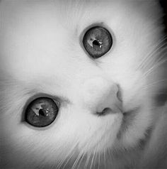 kitten in black n white