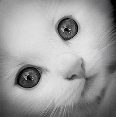 kitten in black n white