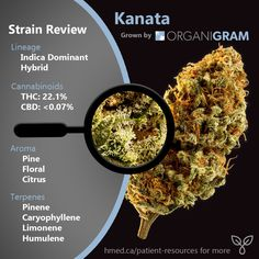 20 Best Strain Reviews images in 2019 | Cannabis, Medical