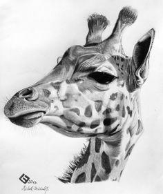 Giraffe Pencil Sketch Art By: Michal Bocanek Drawing Giraffe Pls - - jpeg Realistic Animal Drawings, Pencil Drawings Of Animals, Animal Sketches, Cool Drawings, Art Sketches, Face Drawings, Giraffe Drawing, Giraffe Art, Desenho Tattoo