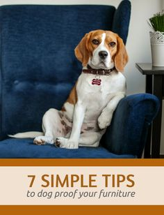 7 Simple Tips to Dog