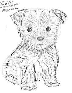 Как-нарисовать-йоркширского-терьера-карандашом-4.jpg (450×579)
