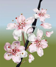 iCLIPART - Royalty Free Clipart Image of Cherry Blossoms