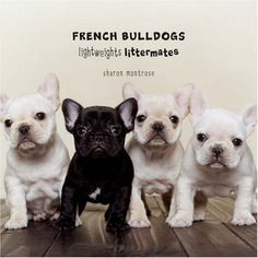 Hello Cute Frenchies!