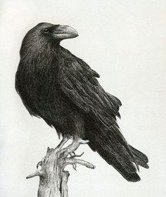 Raven by ~Kaelycea on deviantART