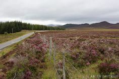 Ruta de 3 días por las Tierras Altas de Escocia. Itinerario, paradas y consejos para que disfrutes de las Highlands escocesas por libre.