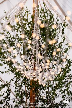 Twinkle light ribbons and a river birch tree in a sailcloth wedding tent in Williamstown. Lighting by Seitel Lighting LLC Wedding Tent Lighting, Tent Wedding, Twinkle Lights, Twinkle Twinkle, Sailing Outfit, Lighting Design, Ribbons, Birch, Christmas Tree