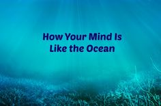 Does Your Happiness Start At The Bottom of the Ocean?