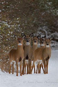 Group of deer quietly waiting to welcome winter visitors.