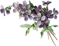"""Photo from album """"цветы винтаж"""" on Yandex. Illustration Blume, Botanical Illustration, Vintage Cards, Vintage Images, Vintage Flowers, Vintage Floral, Violet Tattoo, Etiquette Vintage, Flower Cart"""