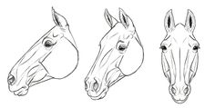 trendy Ideas painting horse head to draw Horse Face Drawing, Horse Drawings, Animal Drawings, Art Drawings, Drawing Animals, Drawing Art, Horse Drawing Tutorial, Arte Equina, Horse Sketch