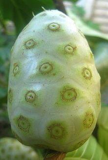 Morinda citrifolia - Wikipedia, la enciclopedia libre