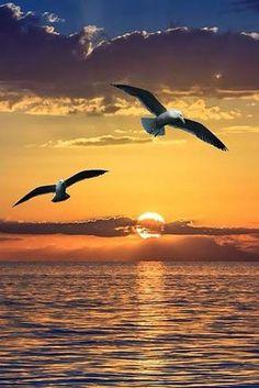 10 Stunning Shots of Sunrise and Sunset Amazing Sunsets, Amazing Nature, Sunset Photography, Landscape Photography, Amazing Photography, Beautiful Sunrise, Sunset Photos, Beach Scenes, Nature Pictures