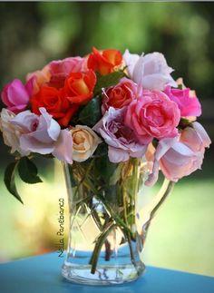 Beautiful Roses - Koleksiyonlar - Google+