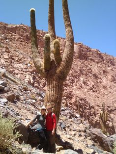 HUGE cactus! San Pedro de Acatama, Chile --This world is really awesome. The woman who make our chocolate think you're awesome, too. Our flavorful chocolate is organic and fair trade certified. We're Peruvian Chocolate. Order some today on Amazon!http://www.amazon.com/gp/product/B00725K254