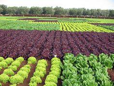 Irrigazione a goccia: a Lodi l'innovazione sostenibile