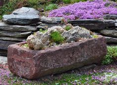 Believe it or not, the Rock Garden , which now covers a good part of an acre of land on the Agricultural Campus of Dalhousie Universi. Garden Structures, Sandy Soil, Garden, Euphorbia Polychroma, Rock Garden Plants, Garden Photography, Garden Troughs, Rock Garden, Perennial Plants