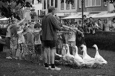 https://flic.kr/p/BmvAgT | Hulst (The Netherlands) - Vestingsdagen (Fortress festival) - Geese guardian - 10 - We're following you, Beatrice !