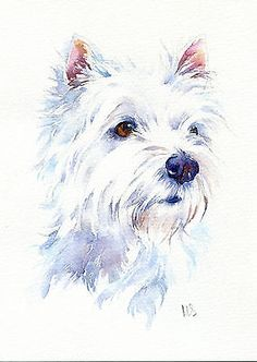 watercolor paintings of west highland terriers - Google Search