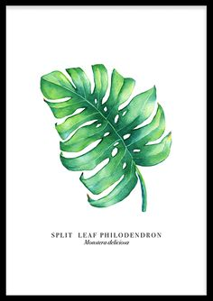 Monstera Leaf (70x100cm) - Print Poster, Plant Leaves, Doodles, Plants, Painting, Posters, Products, Planting Flowers, Drawing Pictures