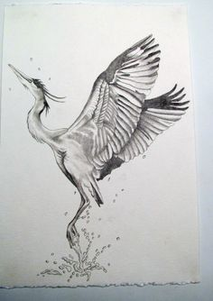 http://phoebekatesillustration.files.wordpress.com/2011/05/js-blue-heron.jpg